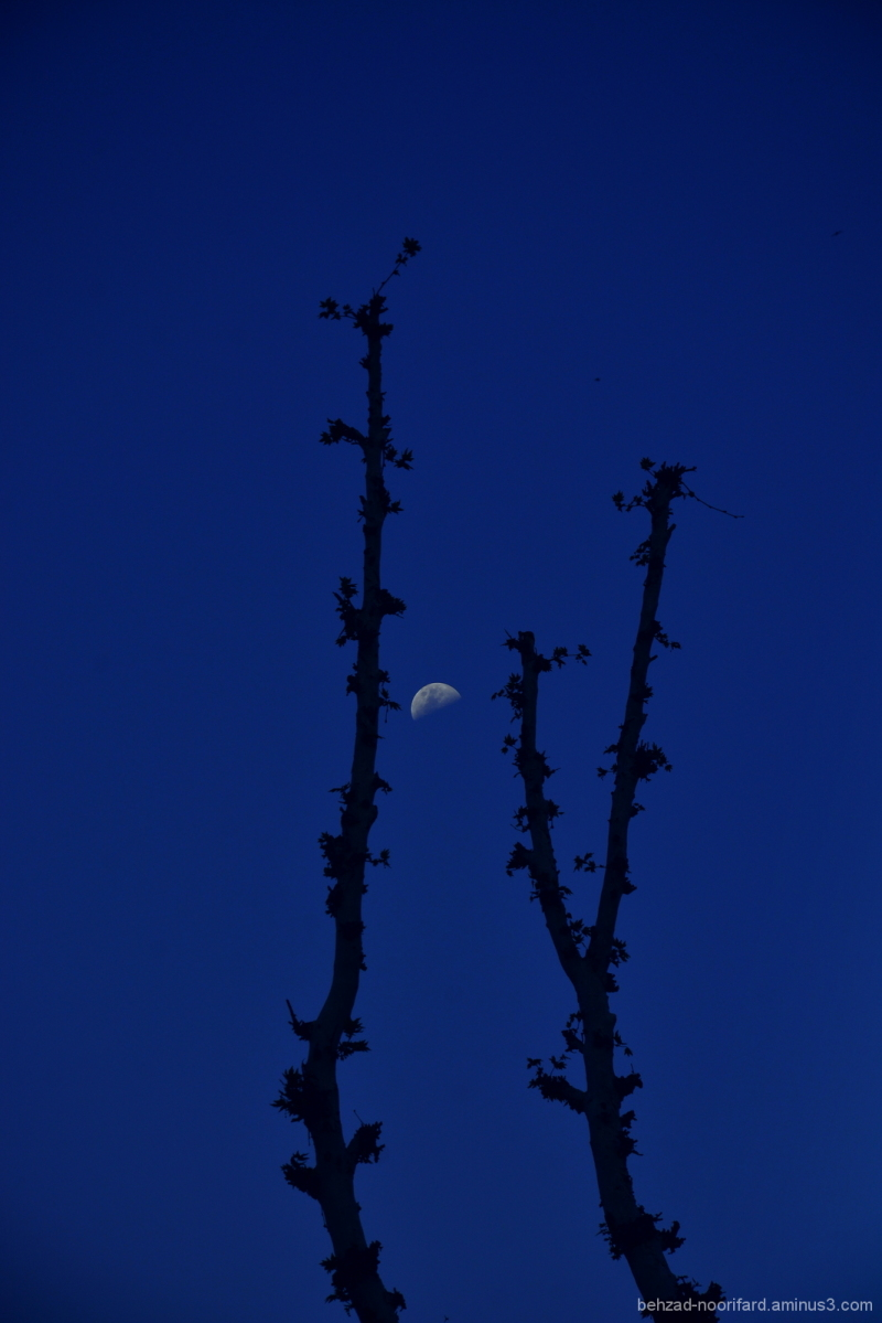 Alone with Moon