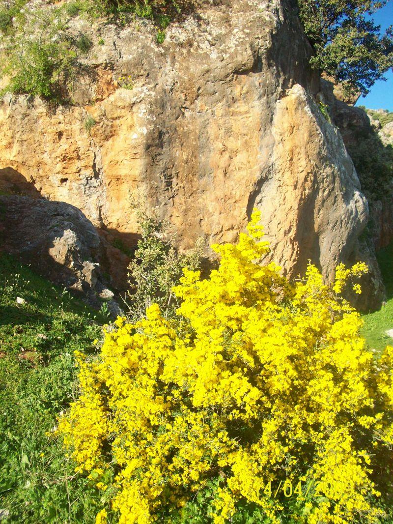 le jaune dans la nature