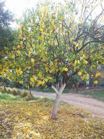 le jaune dans la nature 2