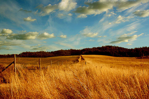 Late afternoon on the Palouse