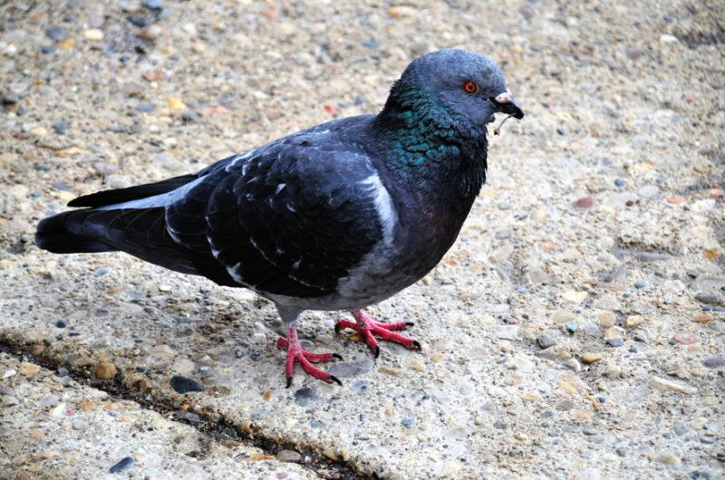 Pigeon toed.
