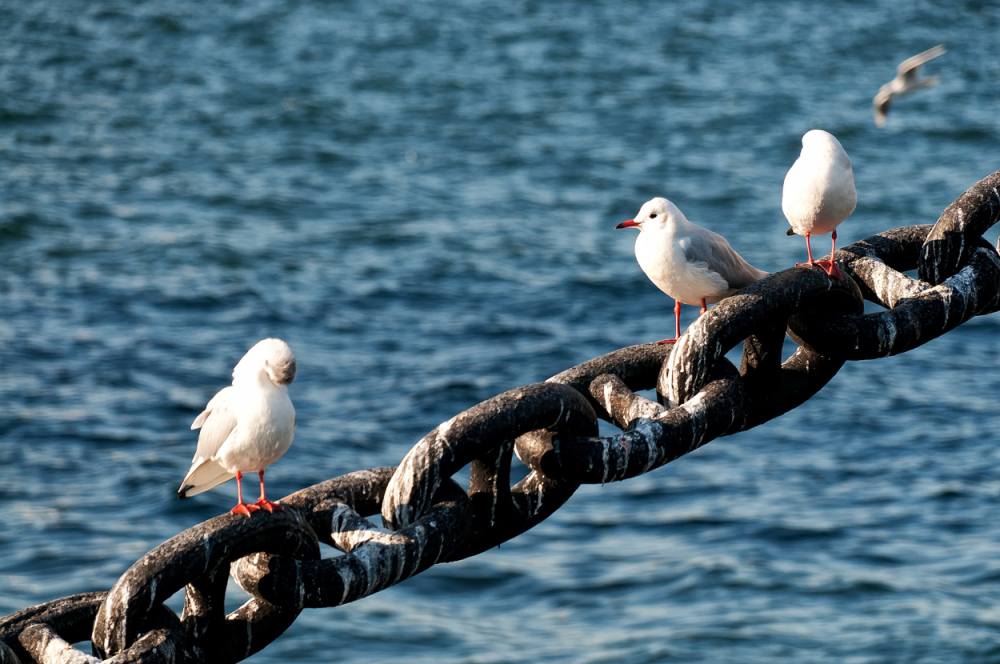 Anchor bird