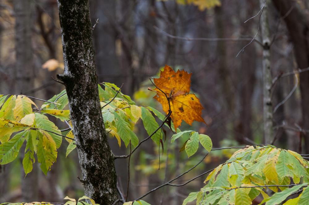 Lone leaf.