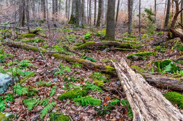 Forest floor.