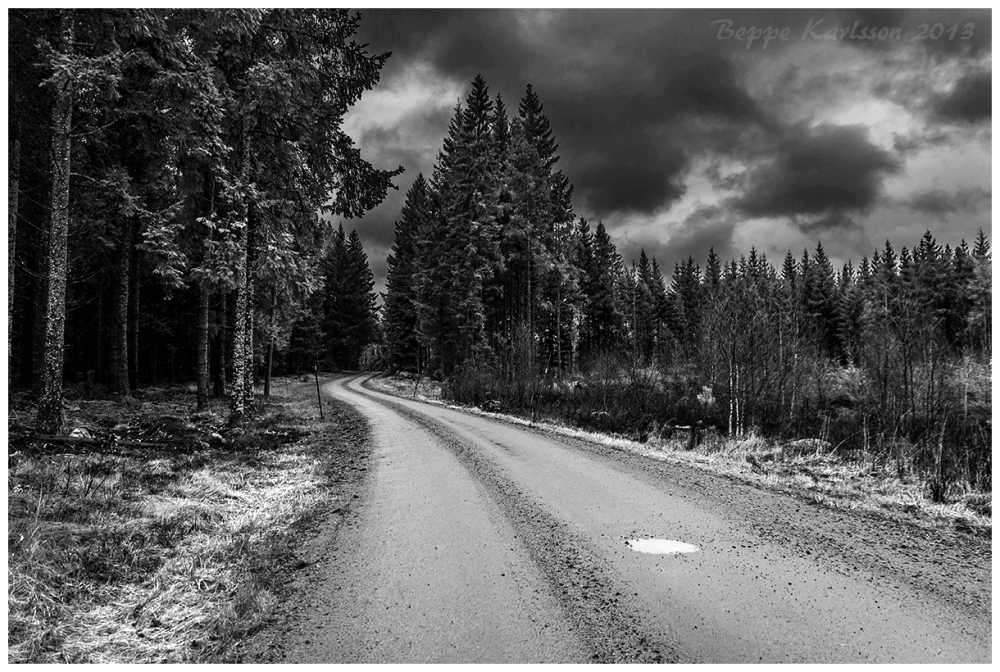 Forest road in Småland Sweden