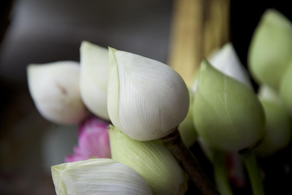 Flor de lotus, Tailàndia