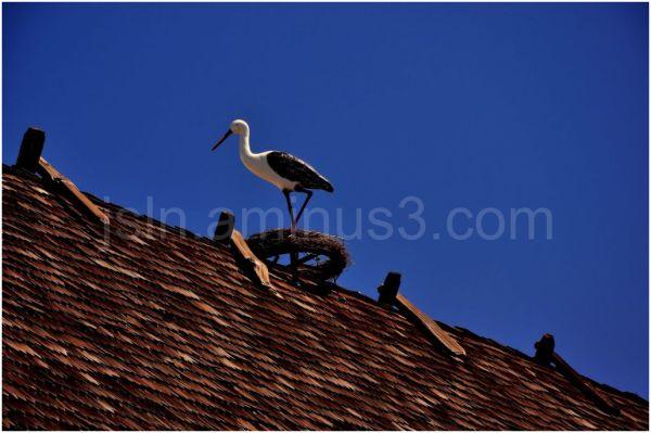 Bird on the hut