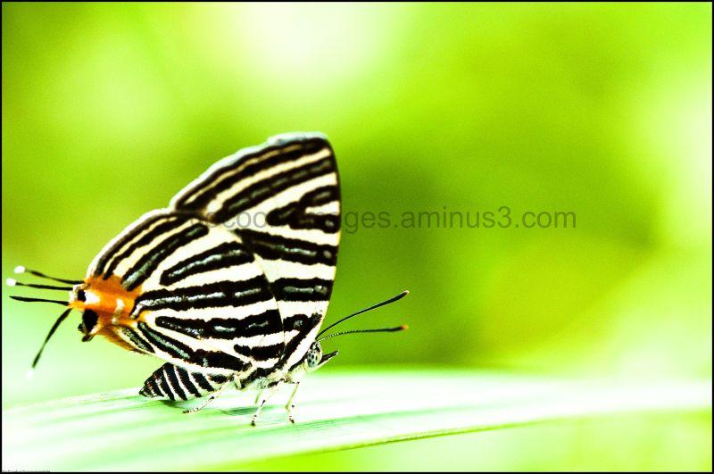 Vlinder met groene achtergrond