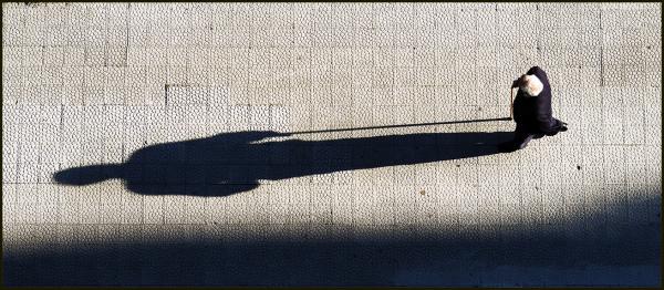 La larga sombra de la vida