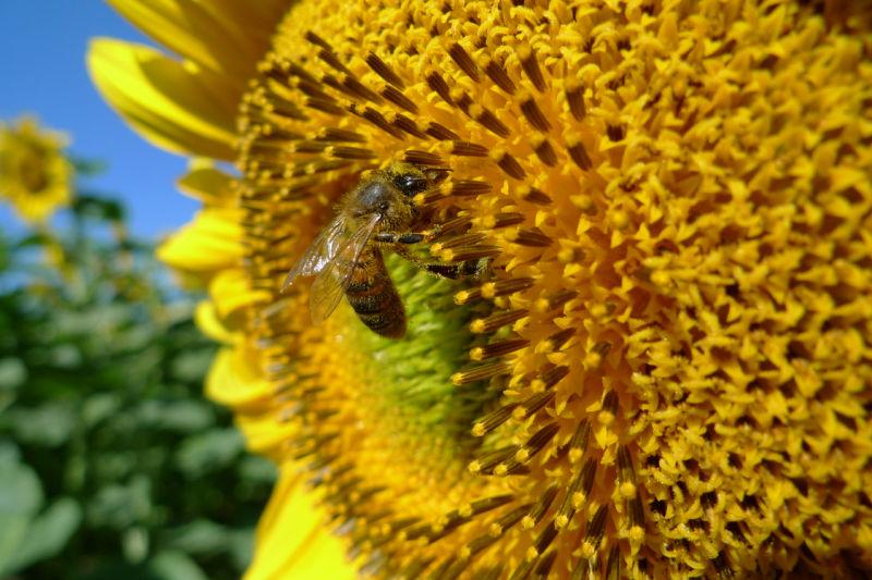 bee attitude