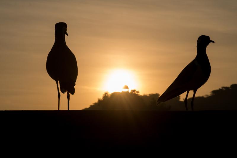 Bundi birds, a morning in India, rajasthan