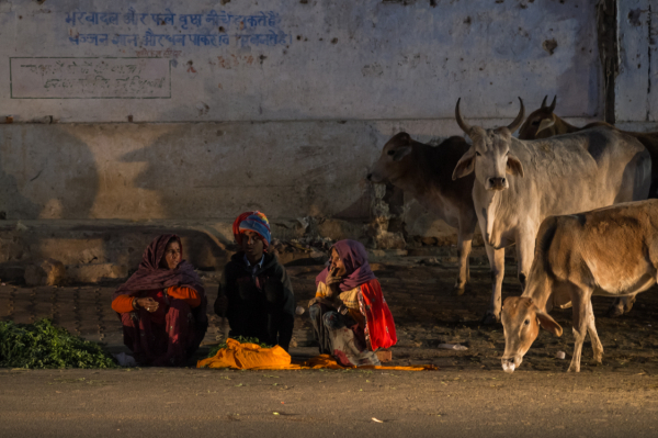 people,street,night,india,pushkar