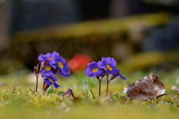 Cimetary flowers