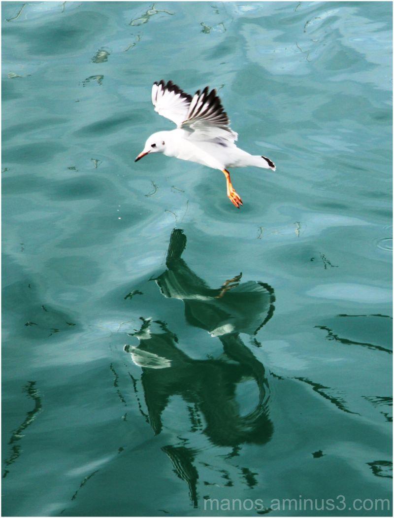 seagulls-7