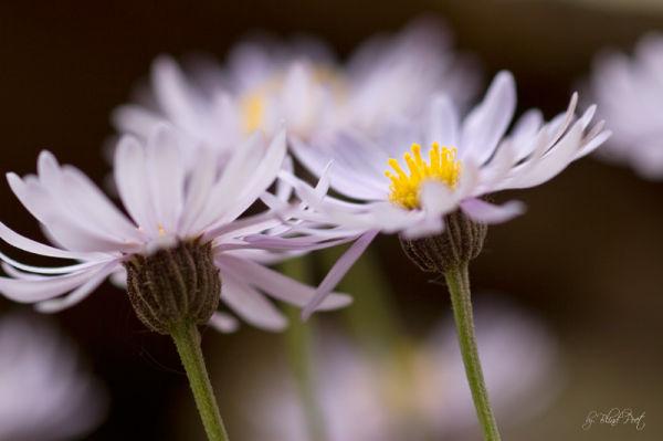 Wildflowers Crystal Meadow, Colorado by Blind Poet