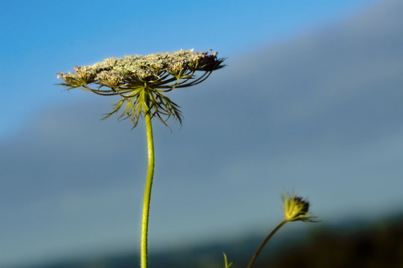 Weeds are beautiful by BlindPoet