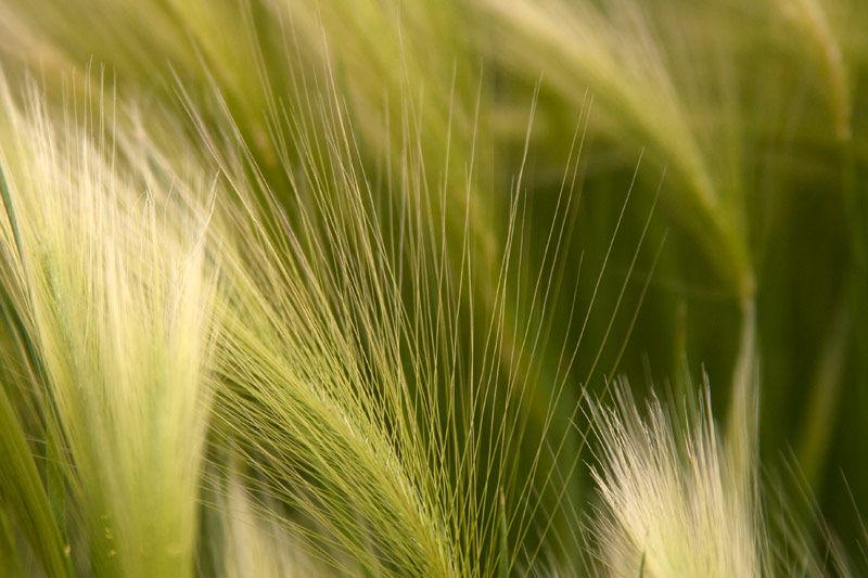 Green Acres by BlindPoet