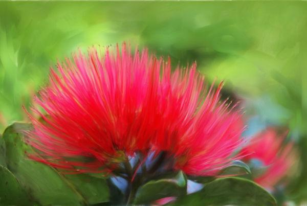 Pohutukawa flower by BlindPoet