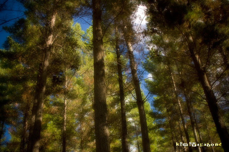 Aupouri Forest New Zealand by BlindPoet