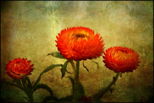 Impressionist_flowers1
