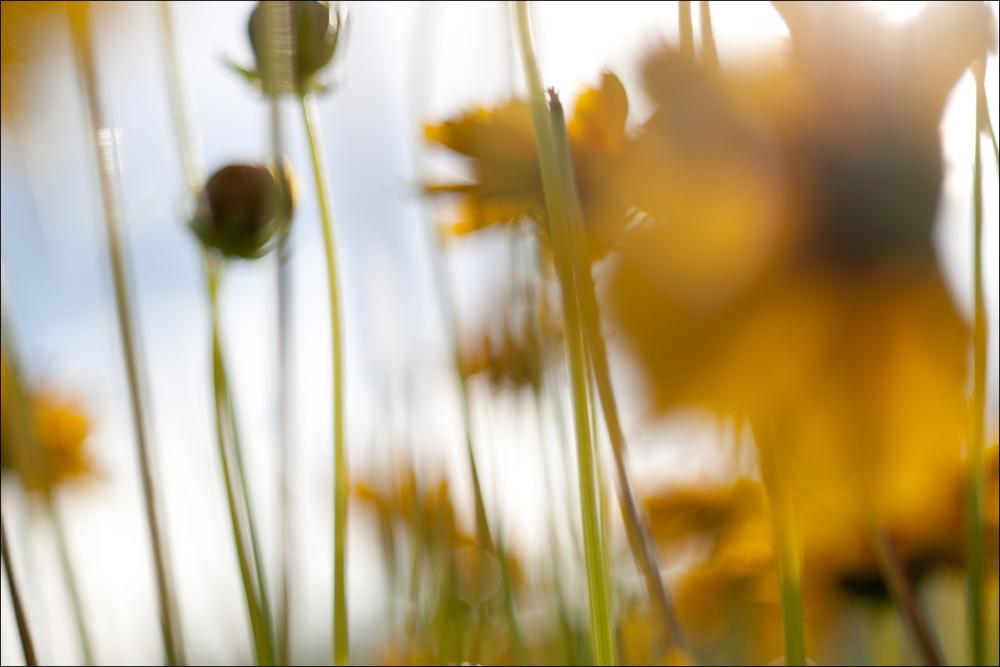 Sun Among Flowers