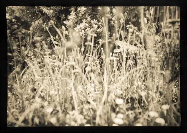 One Day Among Dandelions