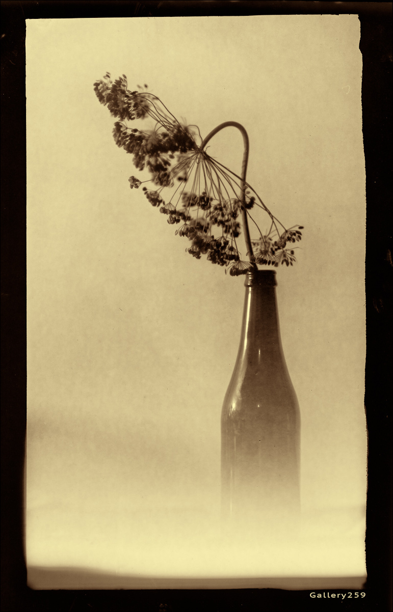 Dill Seedhead & Bottle with a sepia tone.