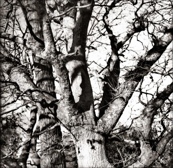 Masked Ball @ Oak Tree Bend