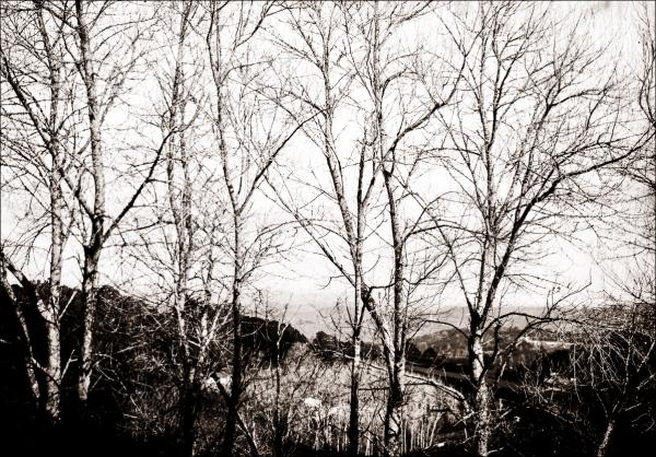 Beyond Walden. Memories of Dresden