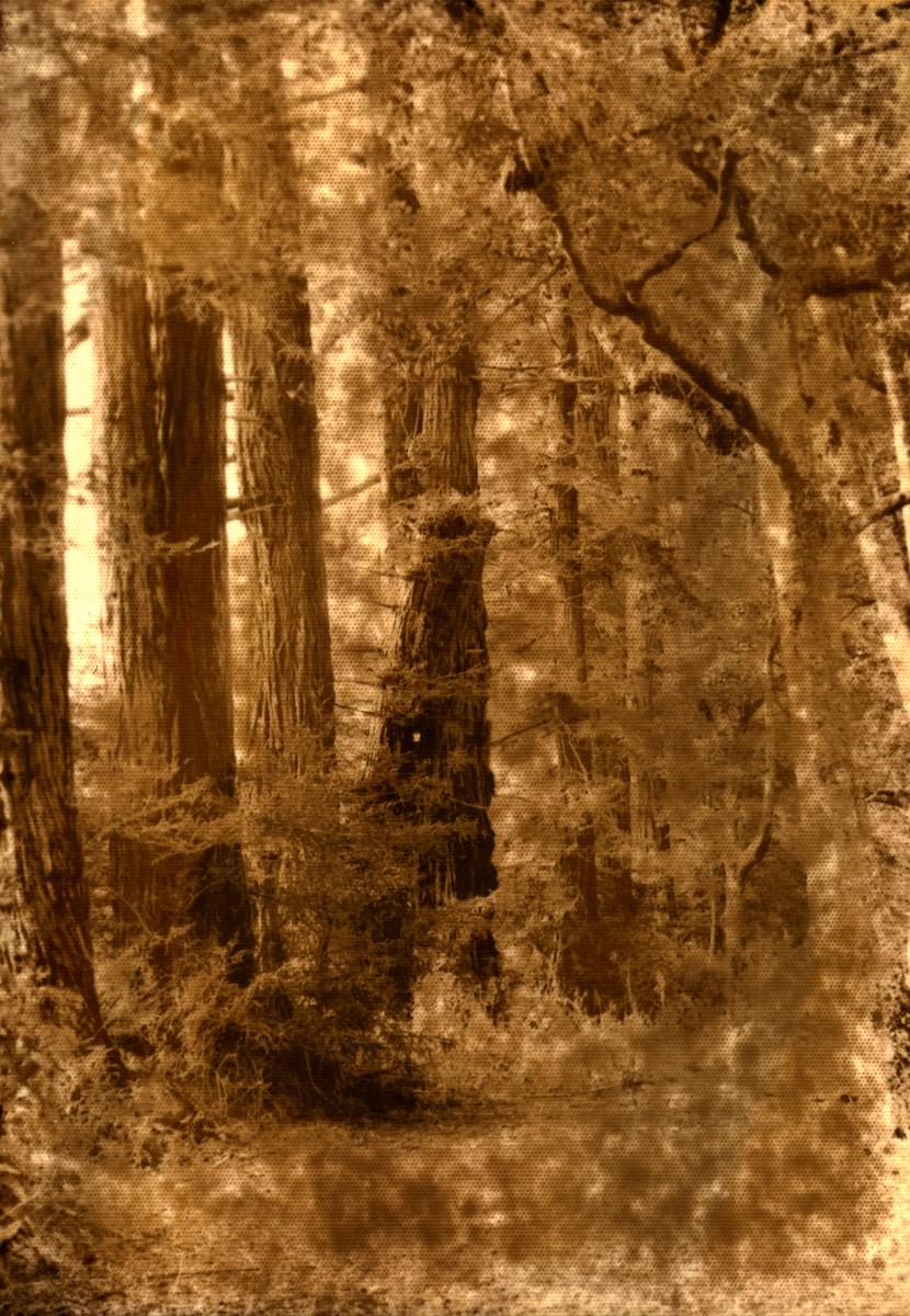 Norwegian Woods by BlindPoet