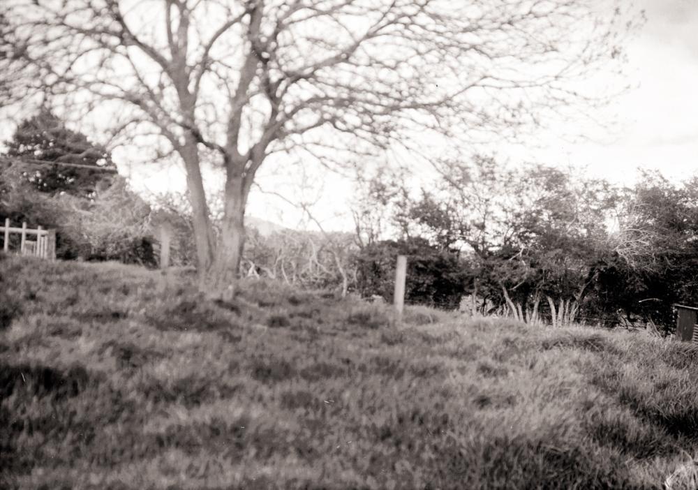 The Privit Fence