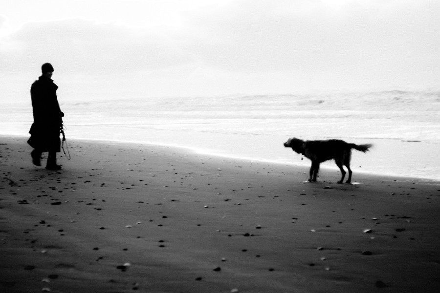 Dog Stories : Waiotahi New Zealand