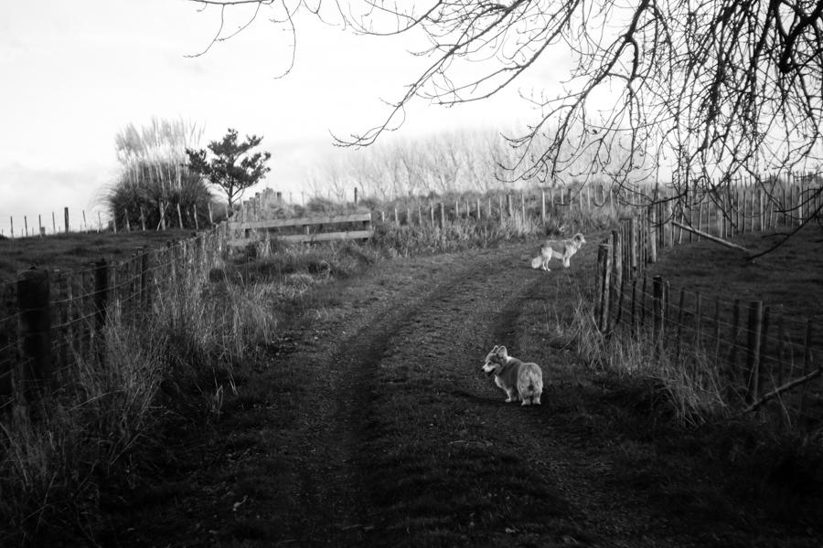 The Kids Take A walk