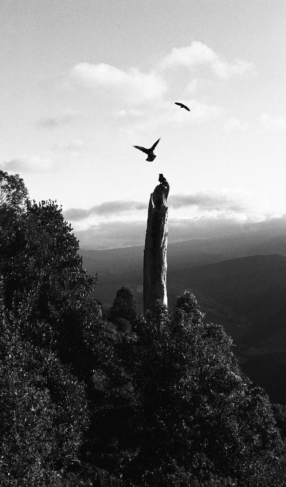 35mm film image of kea on Takaka Hill New Zealand