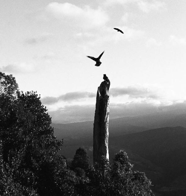 Kea on Takakka Hill New Zealand