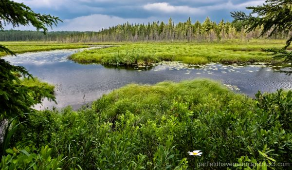 Scenic photo of water and trees in Algonquin Park