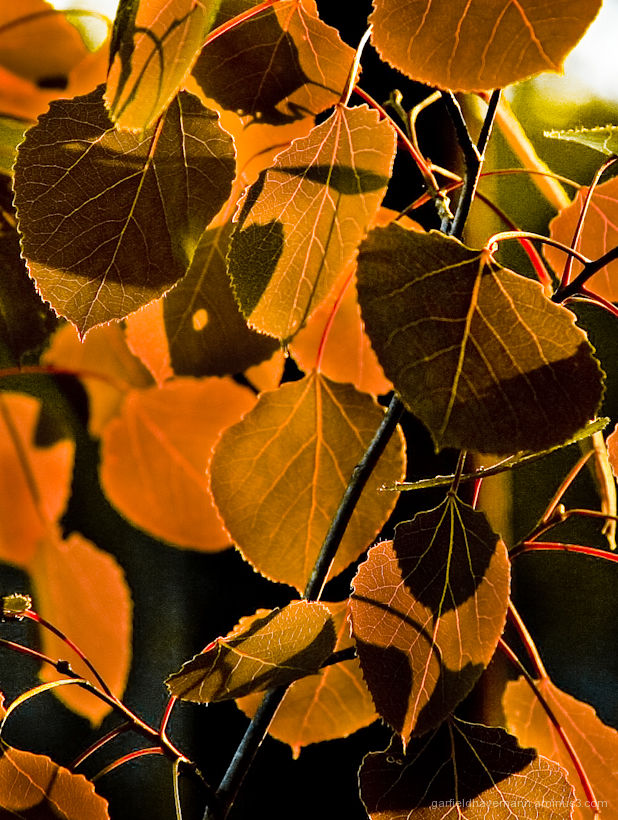 different colors, shadows, lines and tones of Fall