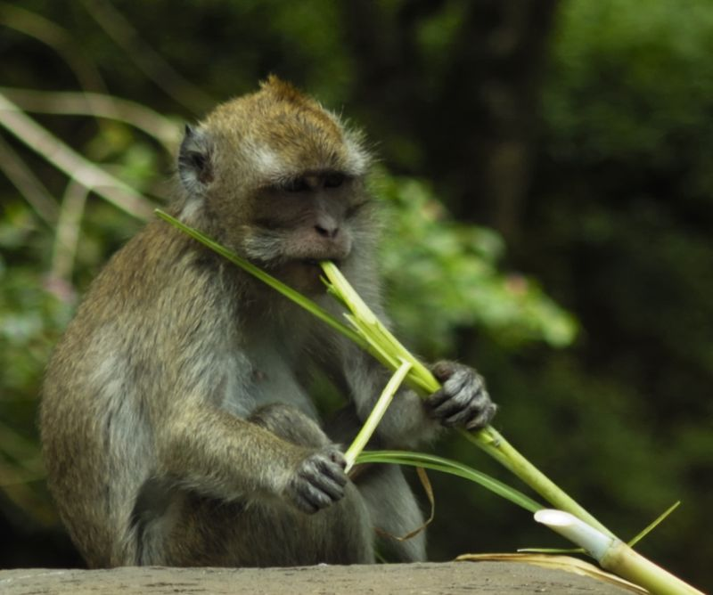 the small monkey