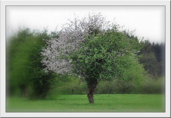 L'arbre aux deux tons...