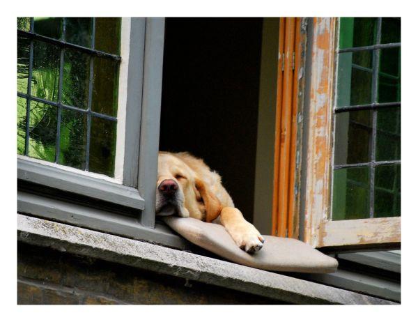 Une sieste qui a du chien....