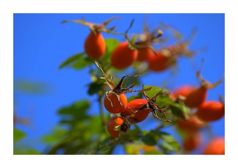 De la fleur au fruit...