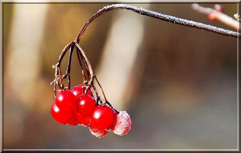 Première gelée...