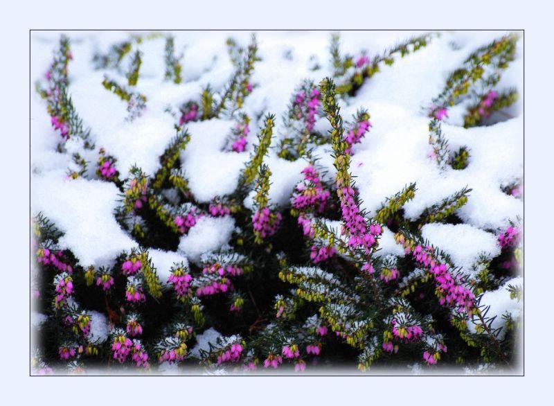 Colorer l'hiver...