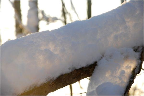 Lumière de neige...