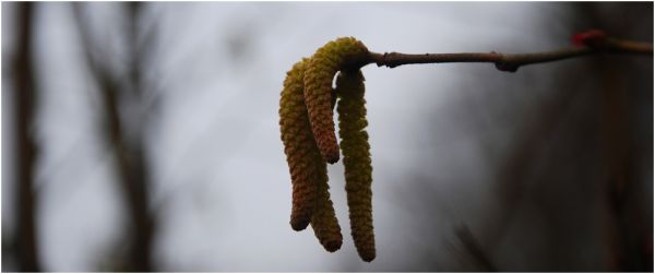 Les bourgeons attendront...