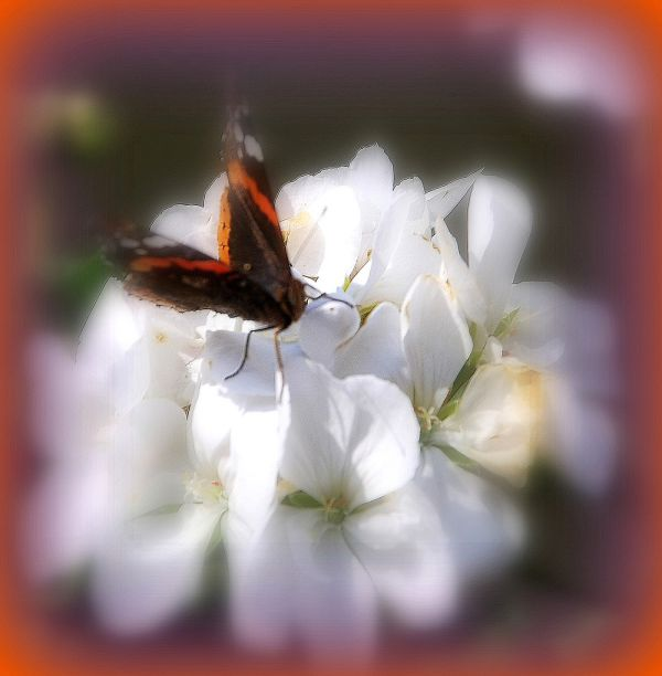 Papillon de jour...