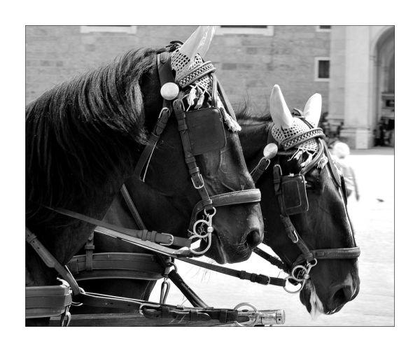 Duo équin...