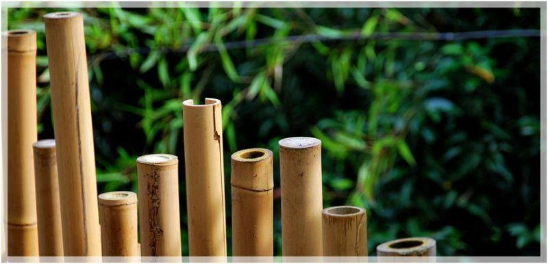 Il tape sur des bambous...
