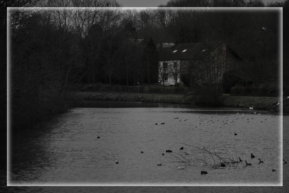 Grisaille hivernale...