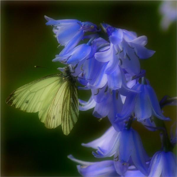 L'effet papillon...